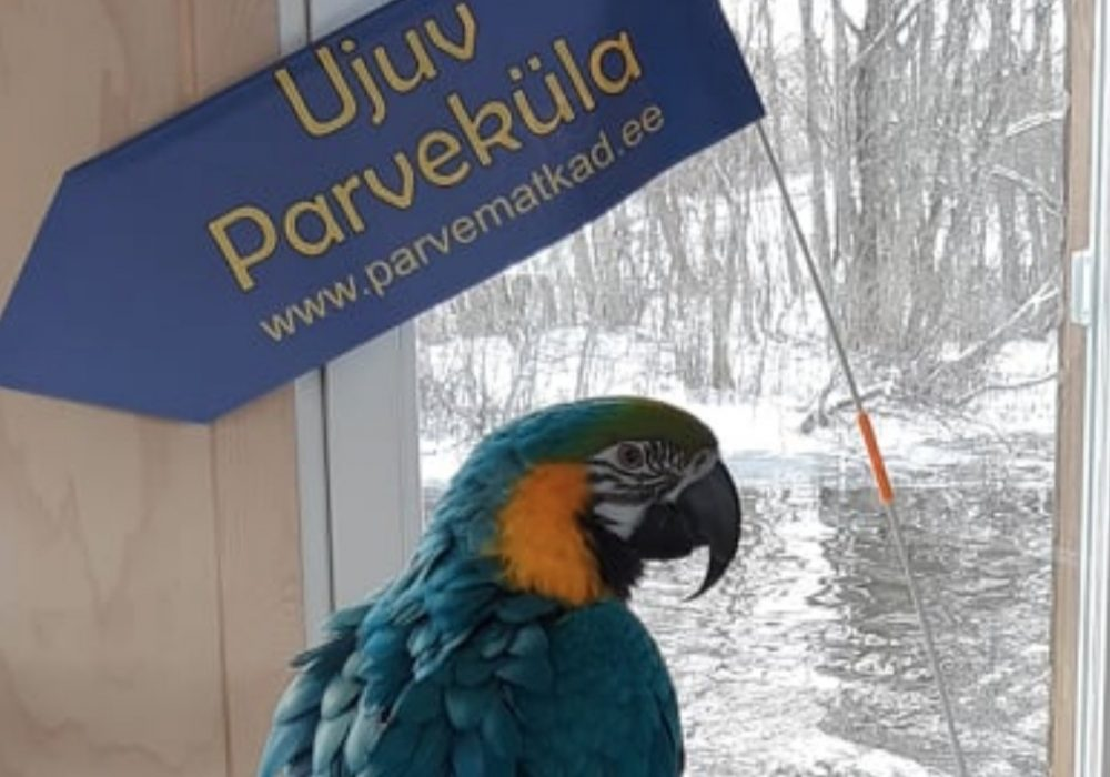 Parveküla The Parrot