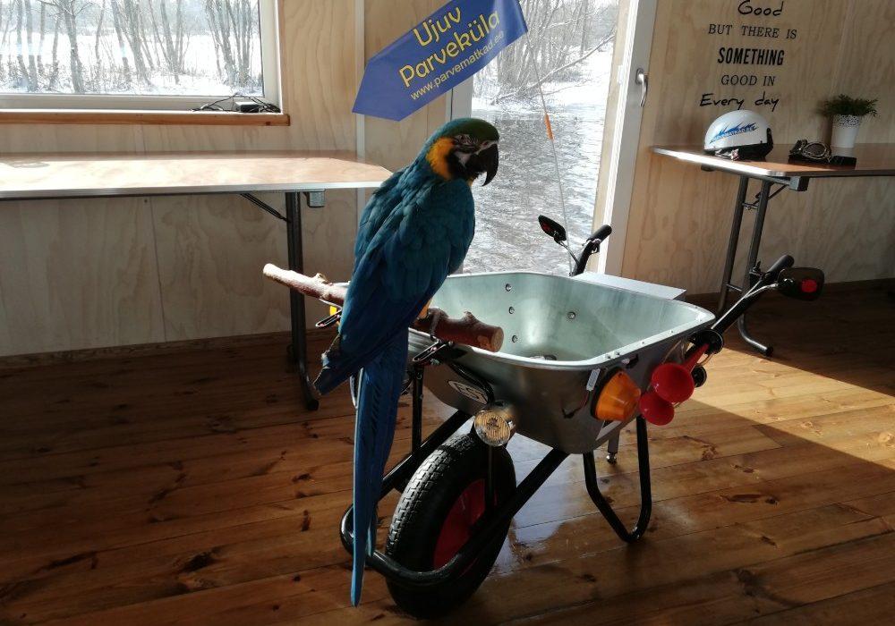 Papagoid parvel